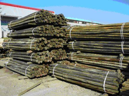 Madera de pino y álamo