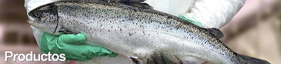 Comprar Salmon, producto maritimo