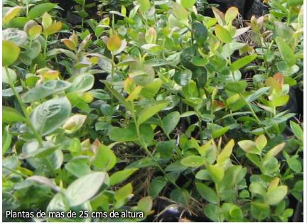 viveros de plantas medicinales: