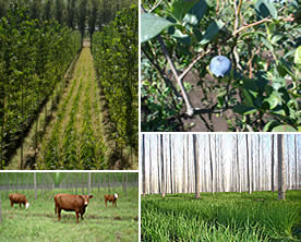 Comprar Productos Area Agrícola
