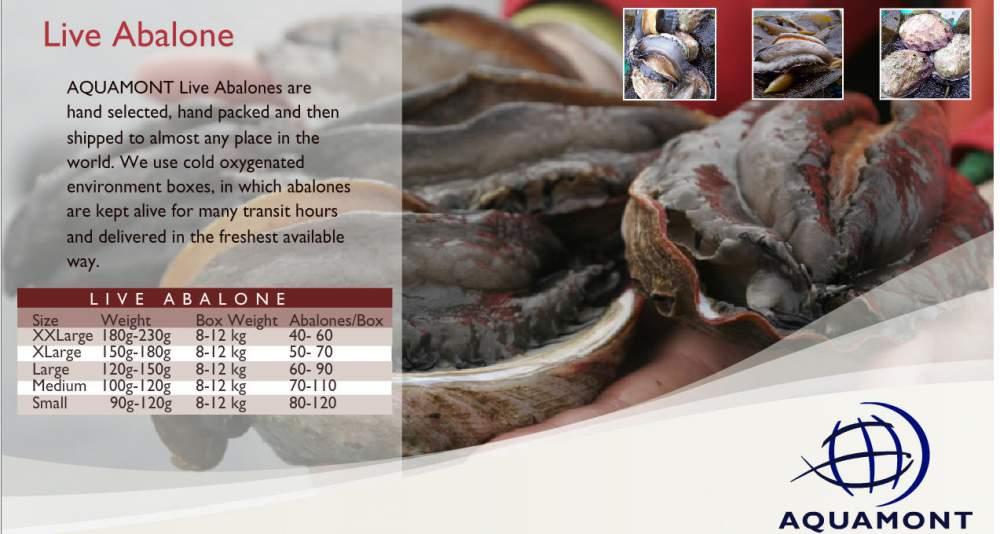 Comprar Productos de mar. Live Abalone