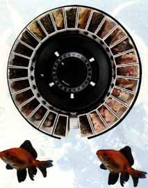 Alimentador Automático de peces