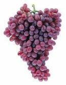 Comprar Uva de Mesa Ruby Seedless