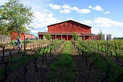 Comprar Vino en barriles del viñedo Fundo La Oriental: