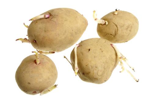 Comprar Patatas para siembra