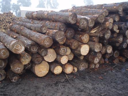 Comprar Trozas, Logs, Rollizos Descortezados