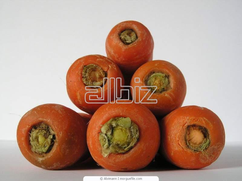 Comprar Semillas de Zanahorias Artemis