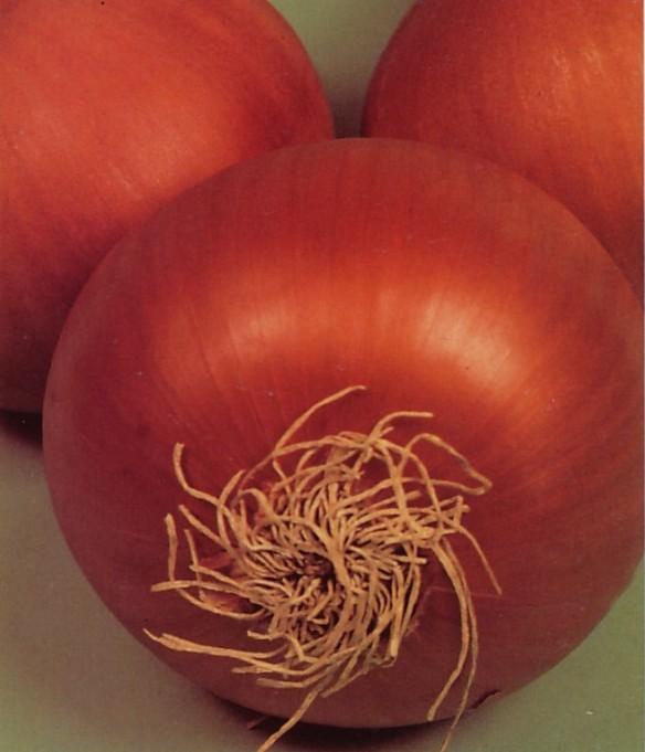 Comprar Semillas de Cebolla Valenciana