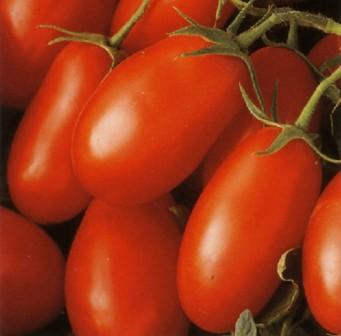 Comprar Semilla de Tomate