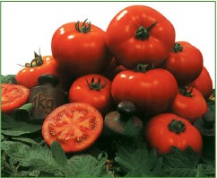 Comprar Semilla de Tomates Amaral