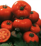 Comprar Semilla de Tomate Amaral