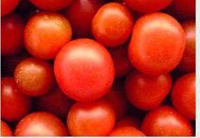 Comprar Tomates consumo malla