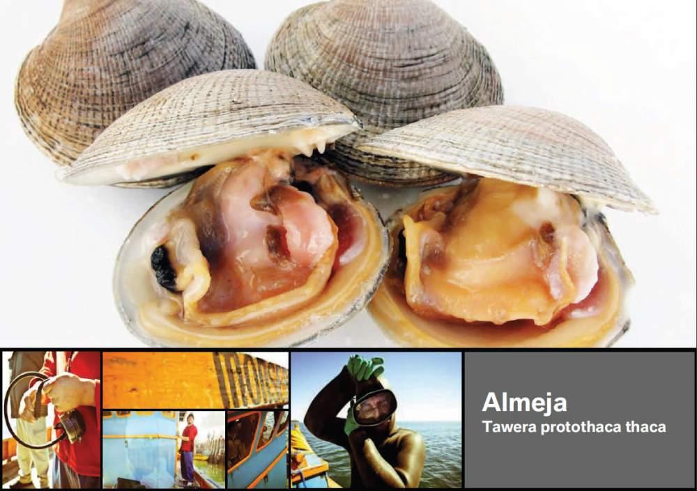 Comprar Almeja Tawera protothaca thaca