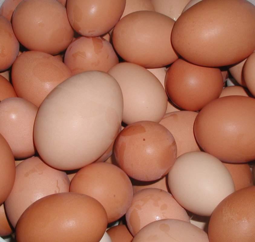Comprar Huevo
