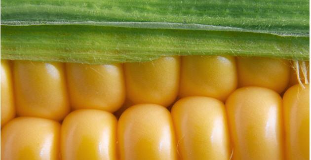 Comprar Productos agricolas