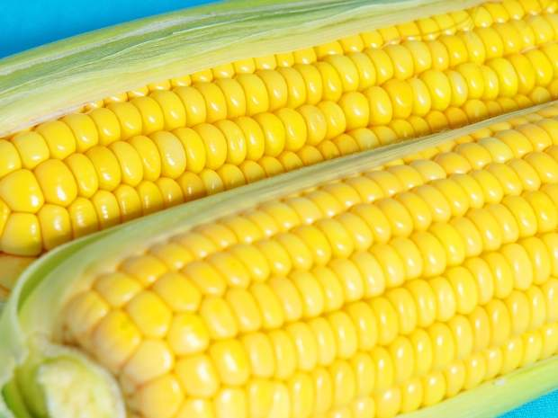 Comprar Yellow Corn # 2 GMO