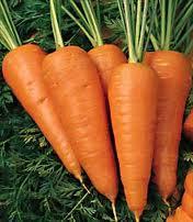 Zanahoria Chantenay Red Cored