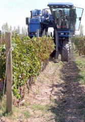Maquinaria para recoleccion de uva.