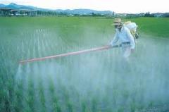 Bacterial fertilizers