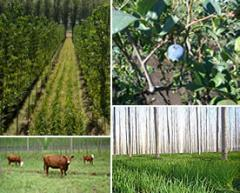 Agricultural output