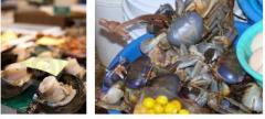 Venta de crustaceos