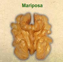 Nuez sin cascara Mariposa
