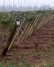 Rollizos Agrícolas