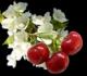 Bioestimulantes Foliares Zymma Active