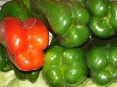 Pimientos Rojo y Verde