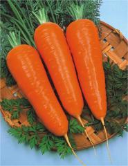 Semillas de Zanahoria