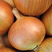 Semilla de Cebollas