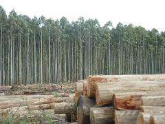 Varas de madera