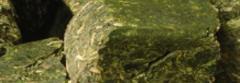 Cubos de Alfalfa con Avena.