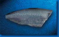 Pescado azul. Cojinova azul