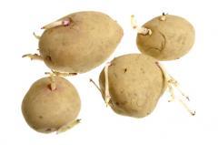 Patatas para siembra