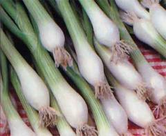 Semillas de cebollines