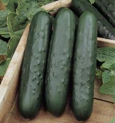 Semillas de Pepino de ensaladas
