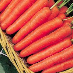 Semillas Zanahoria Nantesa