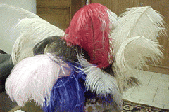 Feathers of ostrich