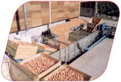 Lineas de Procesamiento para manzanas y peras