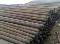 Radiata Pine Poles For Electricity Lines