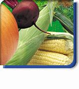 Vegetales, hortalizas