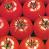Semilla de Tomates Pietro