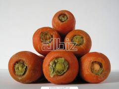 Semillas de Zanahorias Artemis