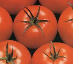 Semilla de Tomates Athena