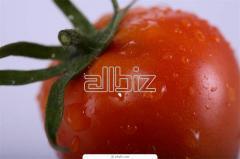 Semillas de Tomates Amely