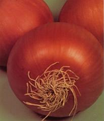 Semillas de Cebolla Valenciana