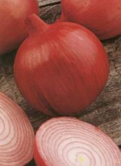 Semilla de Cebolla Roja