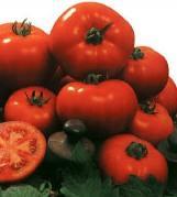 Semilla de Tomate Amaral