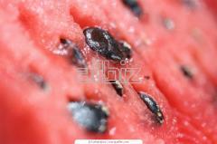 Semillas de Sandia
